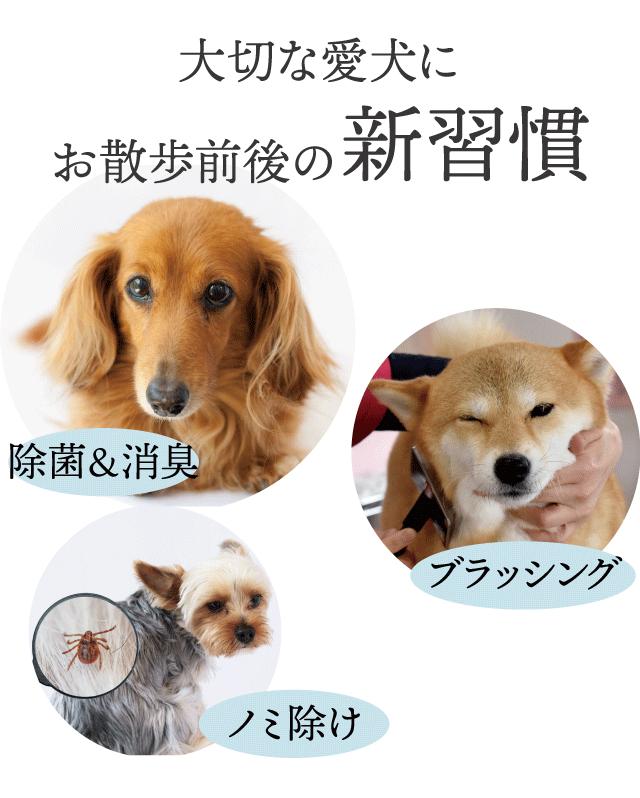 大切な愛犬にお散歩前後の新習慣 1)除菌&消臭 2)ブラッシング 3)ノミ除け